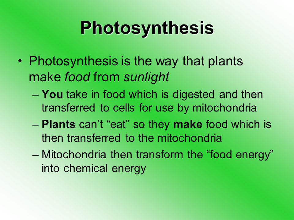 Photosynthesis Photosynthesis is the way that plants make food from sunlight –You take in food which is digested and then transferred to cells for use by mitochondria –Plants can't eat so they make food which is then transferred to the mitochondria –Mitochondria then transform the food energy into chemical energy