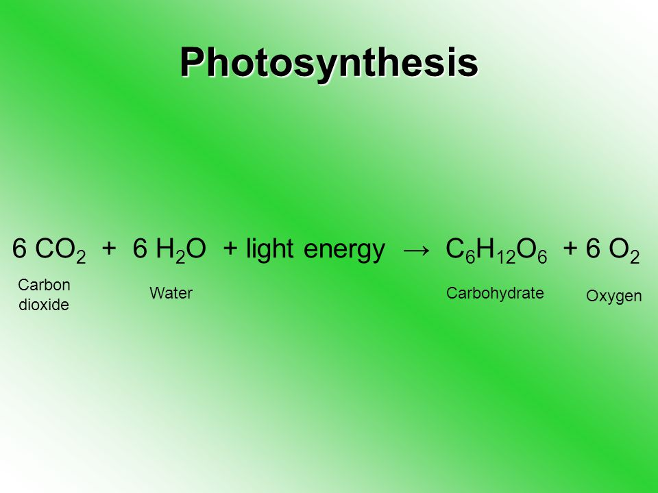 Photosynthesis 6 CO H 2 O + light energy → C 6 H 12 O O 2 Carbon dioxide WaterCarbohydrate Oxygen