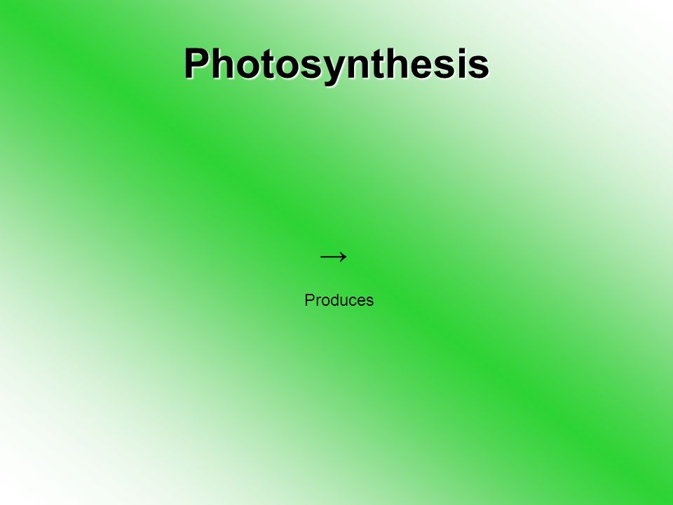 Photosynthesis → Produces