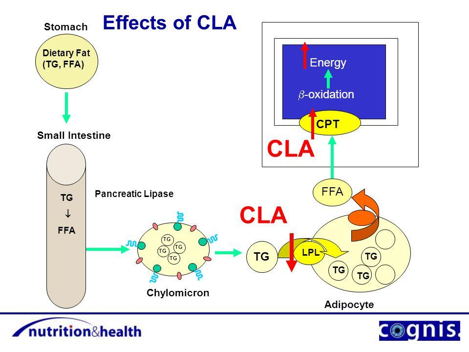 Stomach Small Intestine Dietary Fat (TG, FFA) Pancreatic Lipase TG  FFA Chylomicron TG Adipocyte TG LPL TG CPT  -oxidation Energy Muscle Cell Mitochondria FFA CLA Effects of CLA