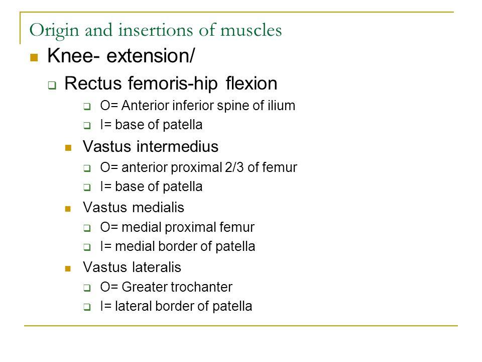 Origin and insertions of muscles Knee- extension/  Rectus femoris-hip flexion  O= Anterior inferior spine of ilium  I= base of patella Vastus intermedius  O= anterior proximal 2/3 of femur  I= base of patella Vastus medialis  O= medial proximal femur  I= medial border of patella Vastus lateralis  O= Greater trochanter  I= lateral border of patella