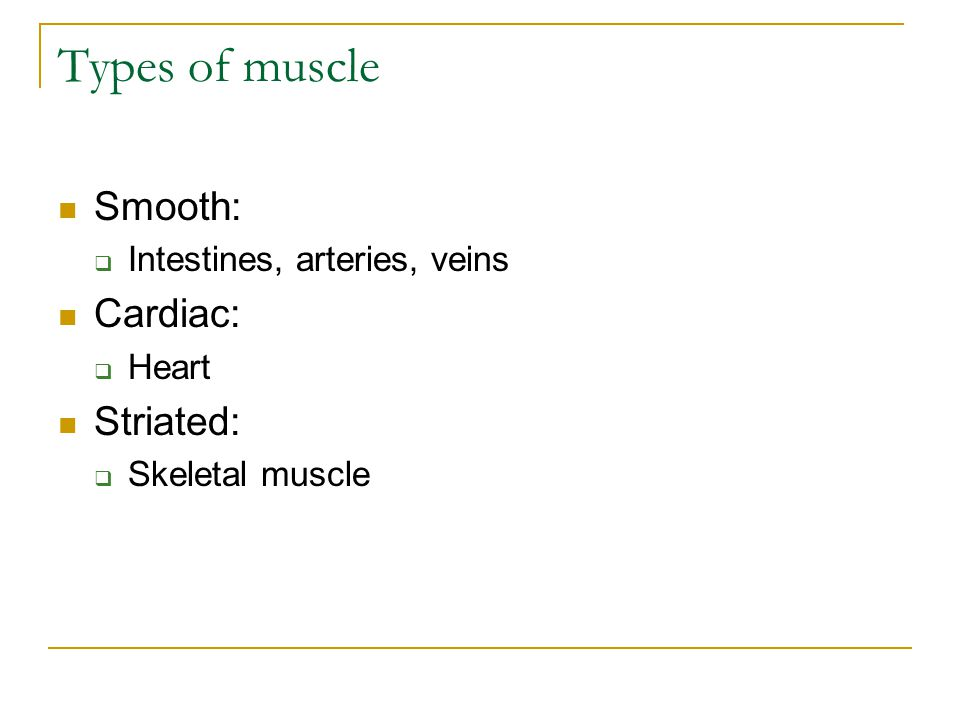 Types of muscle Smooth:  Intestines, arteries, veins Cardiac:  Heart Striated:  Skeletal muscle