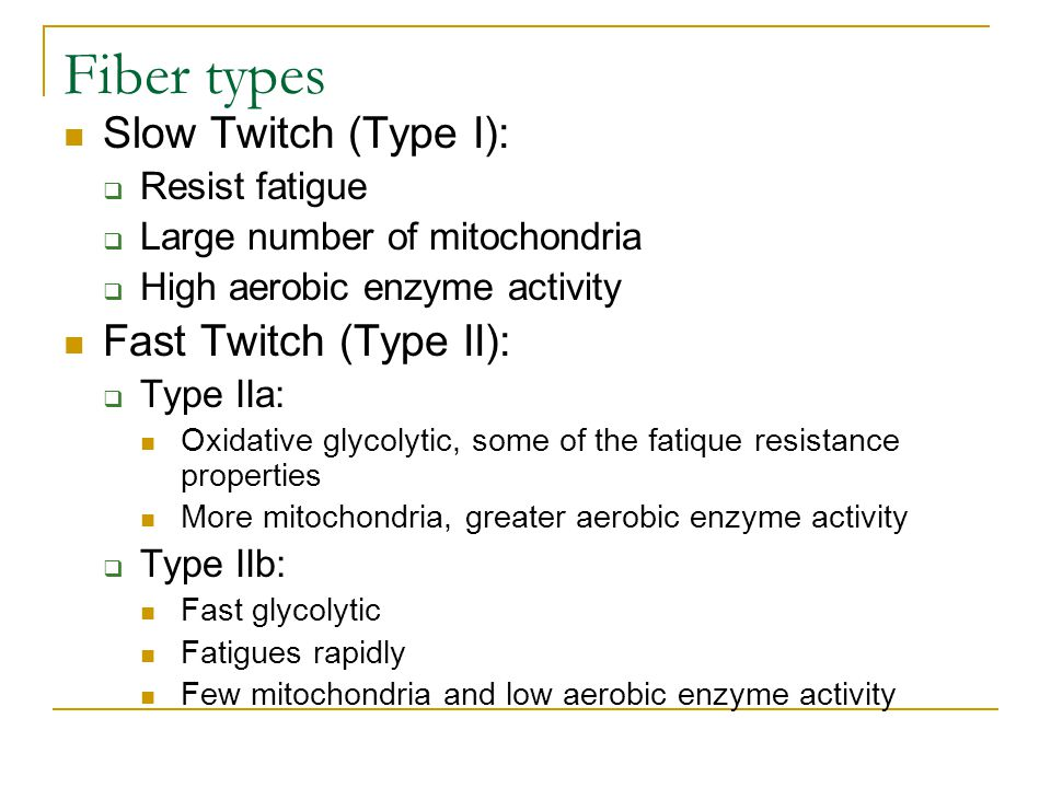 Fiber types Slow Twitch (Type I):  Resist fatigue  Large number of mitochondria  High aerobic enzyme activity Fast Twitch (Type II):  Type IIa: Ox
