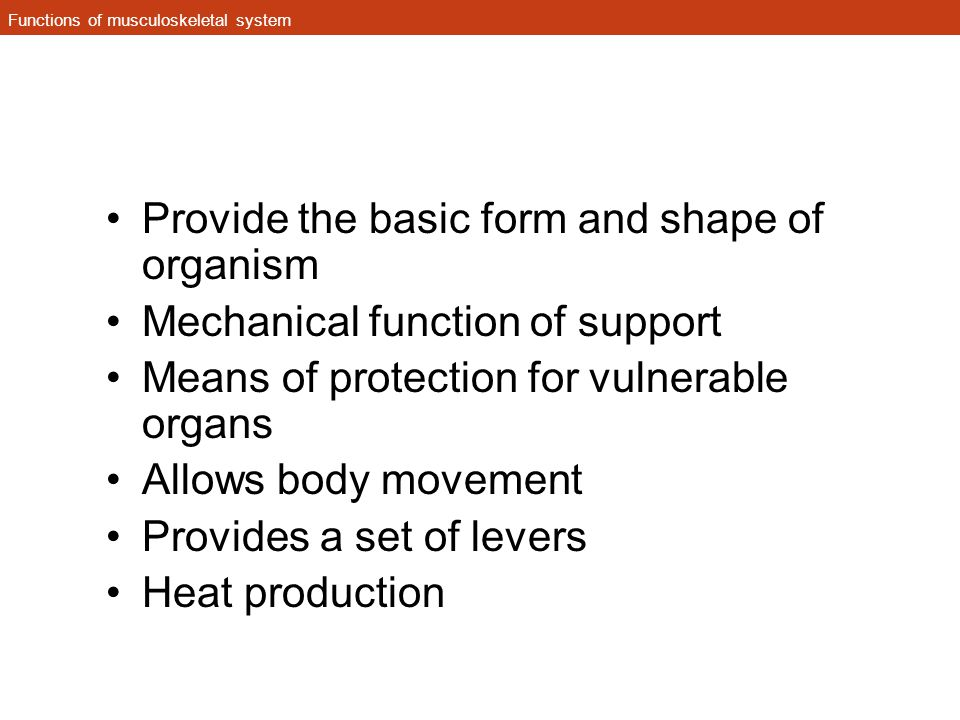 Functions of musculoskeletal system Provide the basic form and shape of organism Mechanical function of support Means of protection for vulnerable org