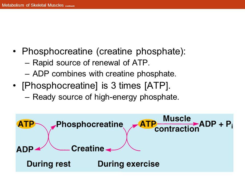 Metabolism of Skeletal Muscles (continued) Phosphocreatine (creatine phosphate): –Rapid source of renewal of ATP.