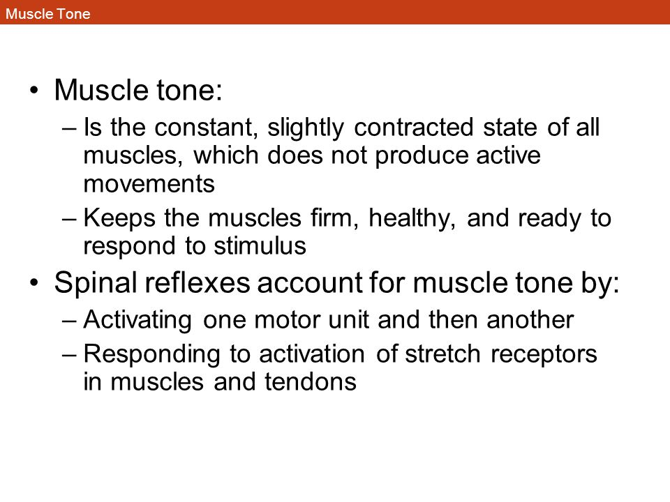 Muscle Tone Muscle tone: –Is the constant, slightly contracted state of all muscles, which does not produce active movements –Keeps the muscles firm,