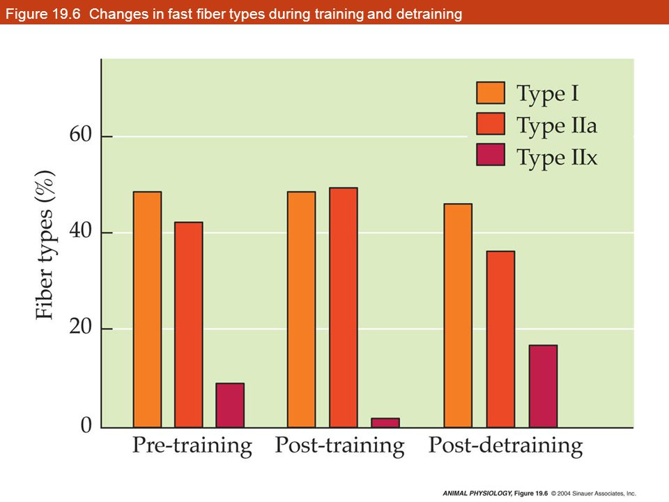 Figure 19.6 Changes in fast fiber types during training and detraining