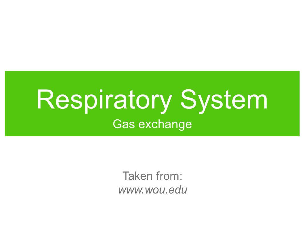 Respiratory System Gas exchange Taken from: www.wou.edu