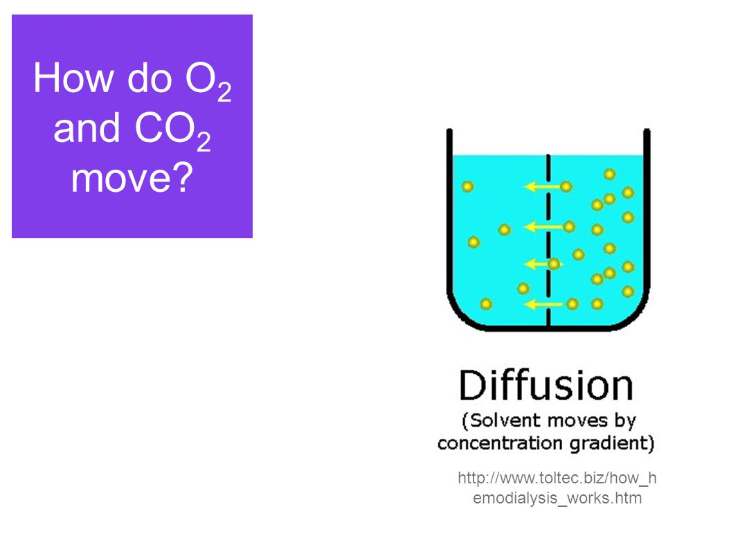 How do O 2 and CO 2 move http://www.toltec.biz/how_h emodialysis_works.htm