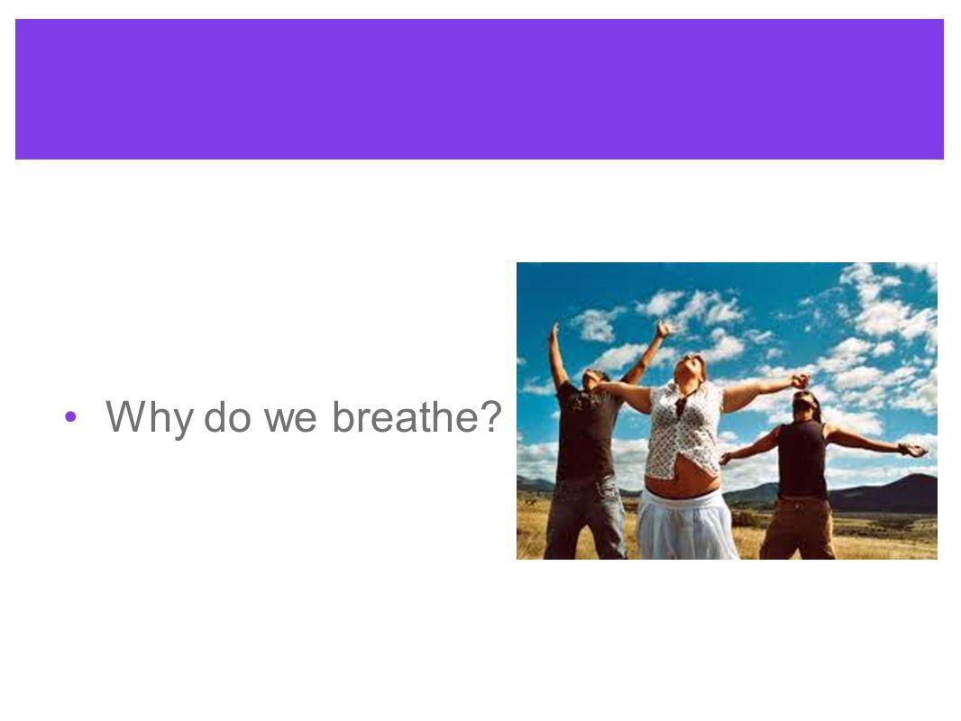 Why do we breathe?