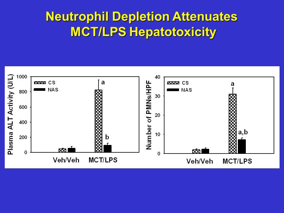 Neutrophil Depletion Attenuates MCT/LPS Hepatotoxicity MCT/LPS Hepatotoxicity