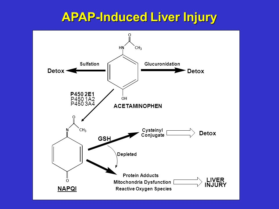 APAP-Induced Liver Injury HNCH 3 O OH ACETAMINOPHEN NCH 3 O O NAPQI SulfationGlucuronidation Detox GSH Detox Cysteinyl Conjugate Protein Adducts Mitochondria Dysfunction Reactive Oxygen Species LIVER INJURY P450 2E1 P450 1A2 P450 3A4 Depleted