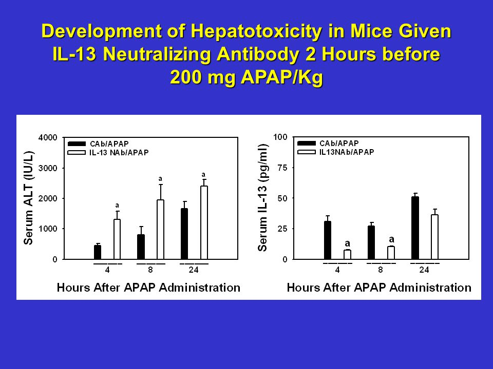 Development of Hepatotoxicity in Mice Given IL-13 Neutralizing Antibody 2 Hours before 200 mg APAP/Kg