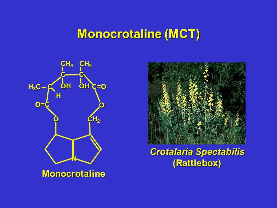 Monocrotaline (MCT) N CH 2 O O O=C CC=O CC OH CH 3 OH H3CH3CH3CH3C H Monocrotaline Crotalaria Spectabilis (Rattlebox)