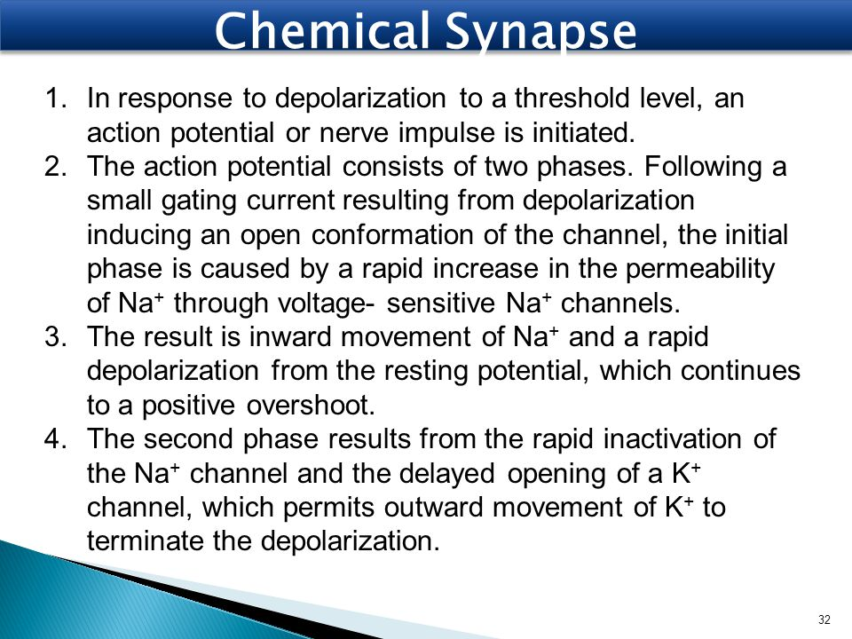 Chemical Synapse 1.In response to depolarization to a threshold level, an action potential or nerve impulse is initiated. 2.The action potential consi