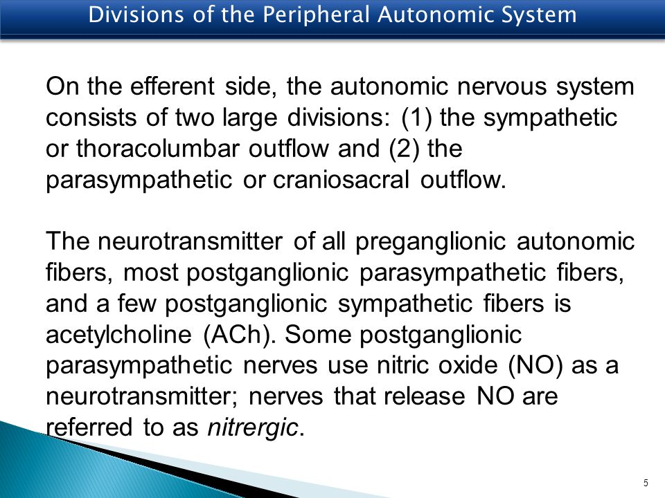 Divisions of the Peripheral Autonomic System On the efferent side, the autonomic nervous system consists of two large divisions: (1) the sympathetic o