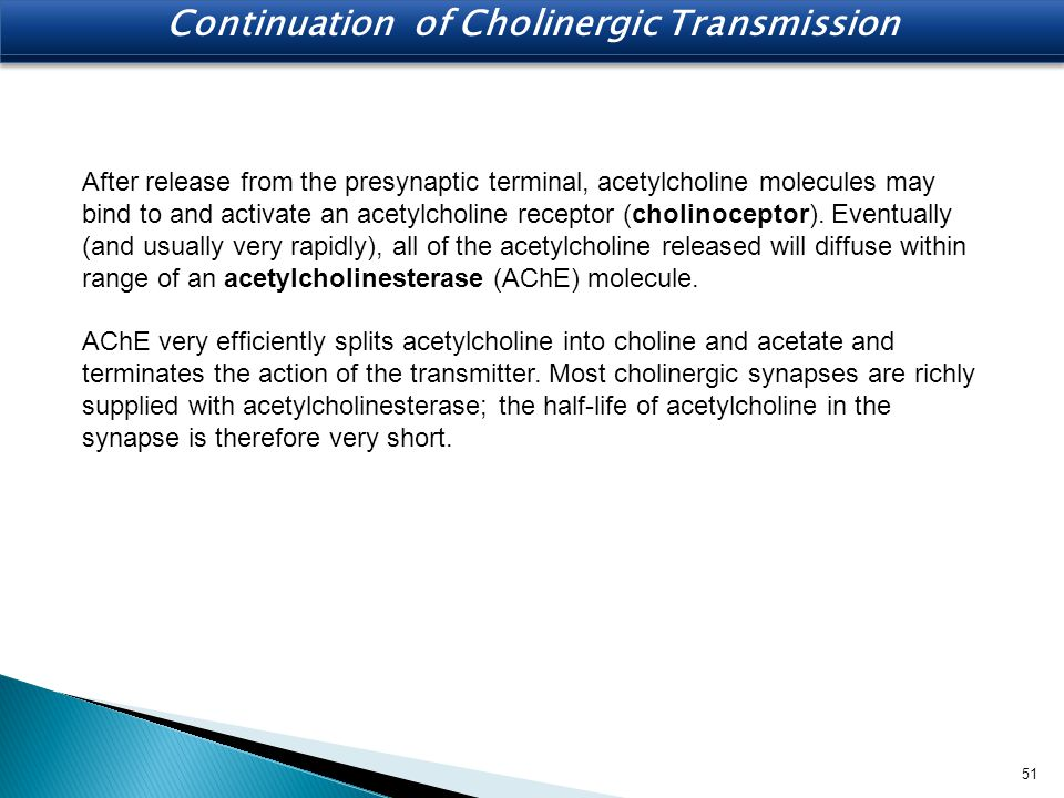After release from the presynaptic terminal, acetylcholine molecules may bind to and activate an acetylcholine receptor (cholinoceptor). Eventually (a