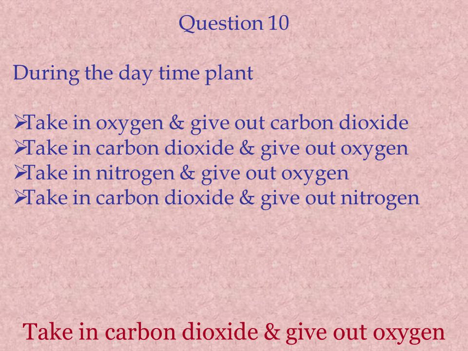 Take in carbon dioxide & give out oxygen Question 10 During the day time plant  Take in oxygen & give out carbon dioxide  Take in carbon dioxide & g