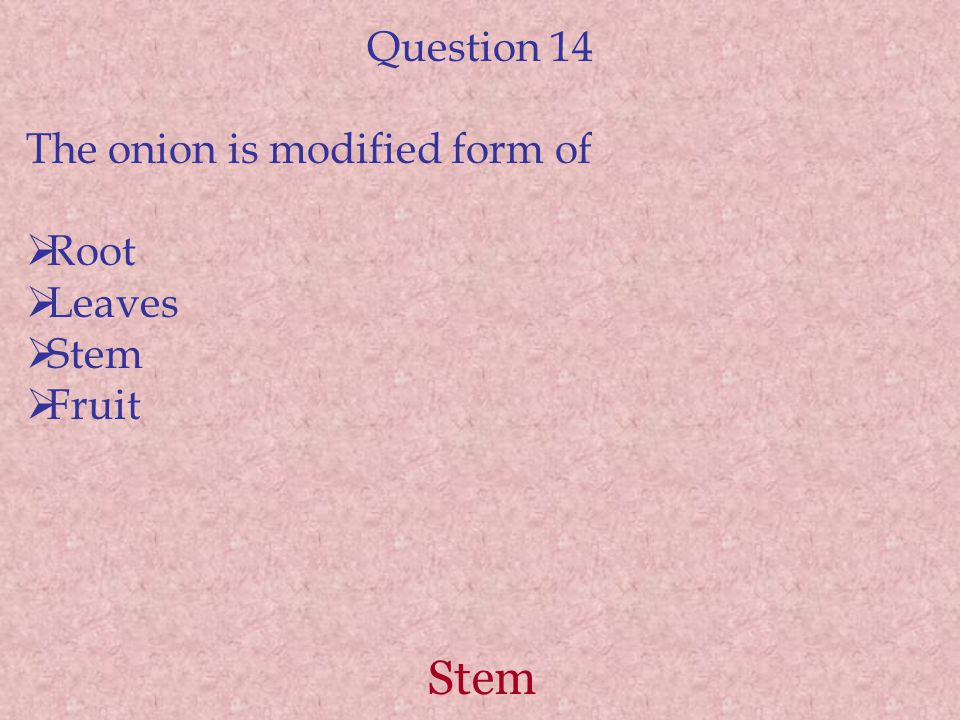 Stem Question 14 The onion is modified form of  Root  Leaves  Stem  Fruit