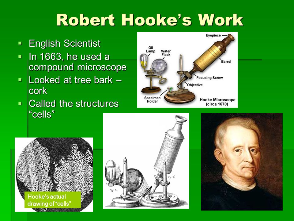 Robert Hooke ' s Work  English Scientist  In 1663, he used a compound microscope  Looked at tree bark – cork  Called the structures cells Hooke's actual drawing of cells