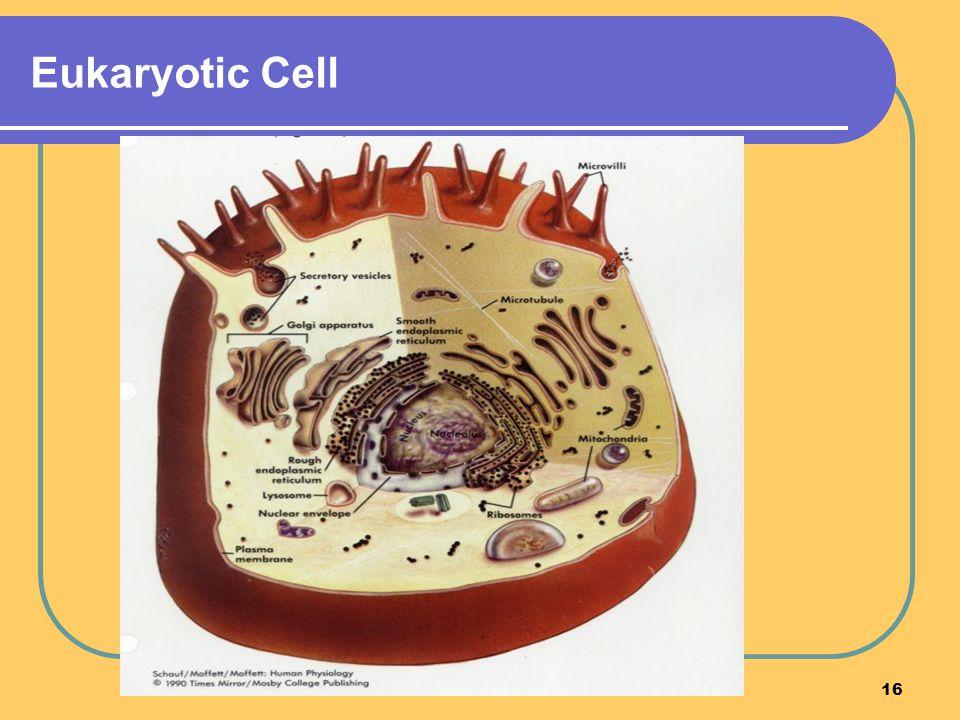 16 Eukaryotic Cell