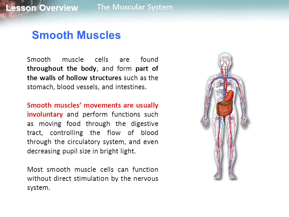 Lesson Overview Lesson Overview The Muscular System Muscles and Movement How do muscle contractions produce movement.