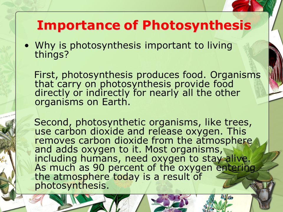 Importance of Photosynthesis Why is photosynthesis important to living things.