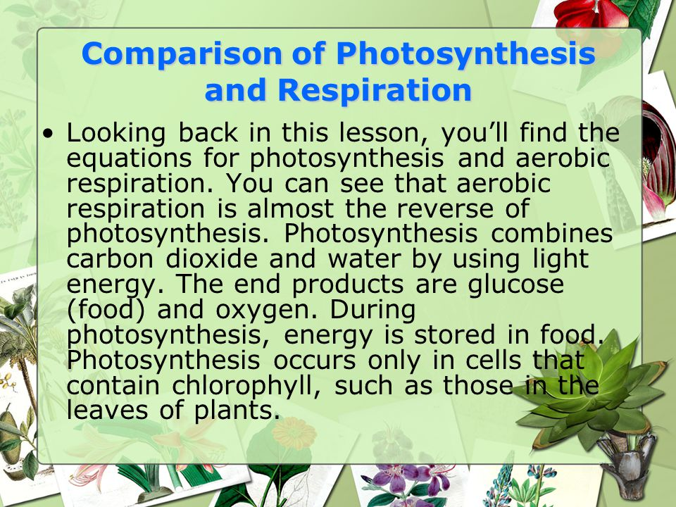 Comparison of Photosynthesis and Respiration Looking back in this lesson, you'll find the equations for photosynthesis and aerobic respiration.