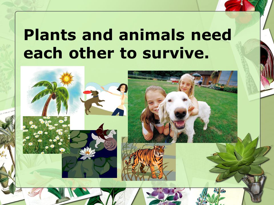 Plants and animals need each other to survive.