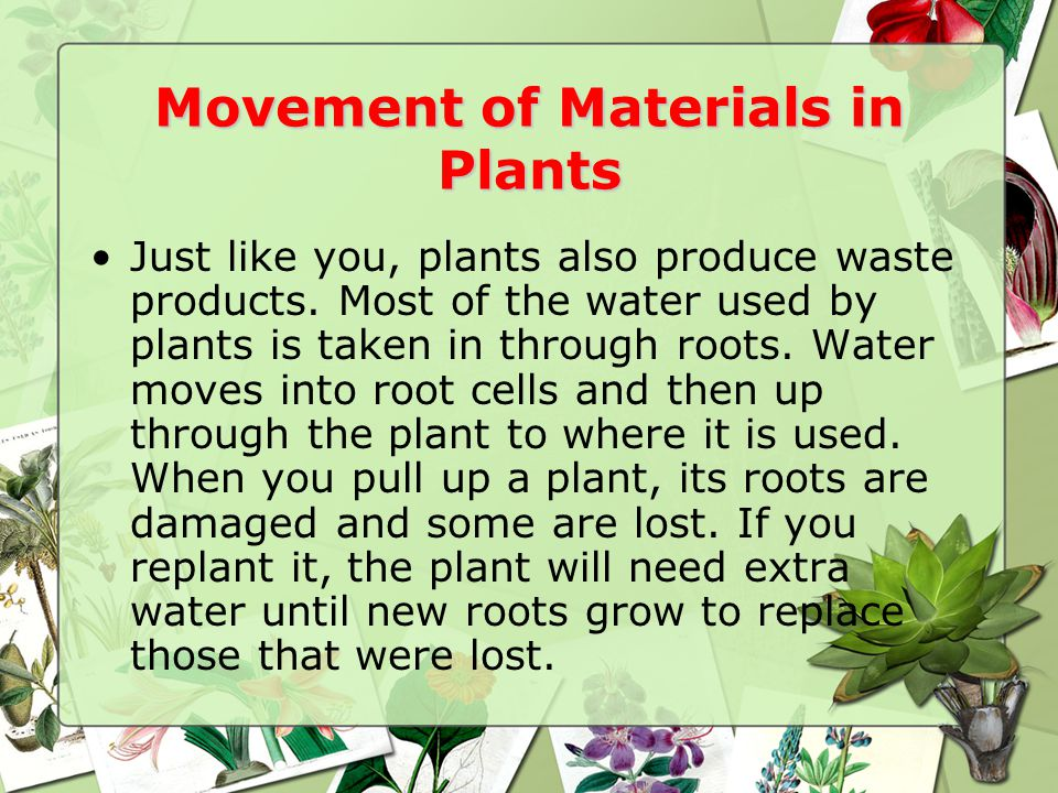 Movement of Materials in Plants Just like you, plants also produce waste products.