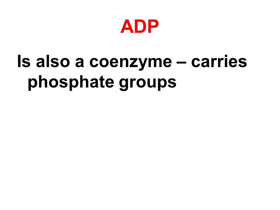 ADP Is also a coenzyme – carries phosphate groups