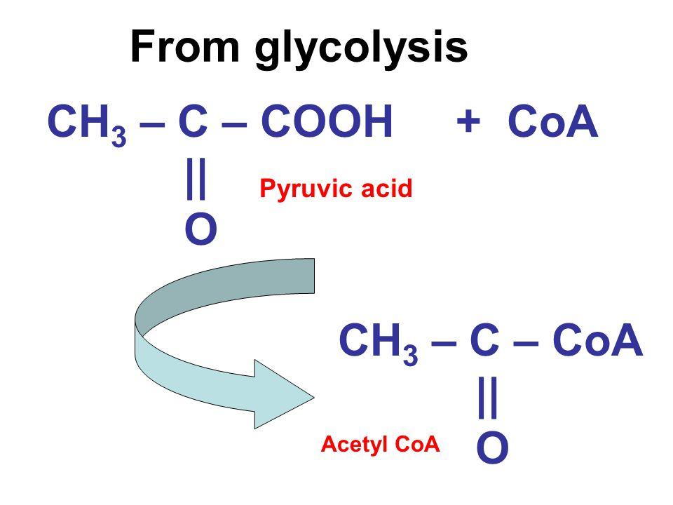 From glycolysis CH 3 – C – COOH || O + CoA CH 3 – C – CoA || O Acetyl CoA Pyruvic acid
