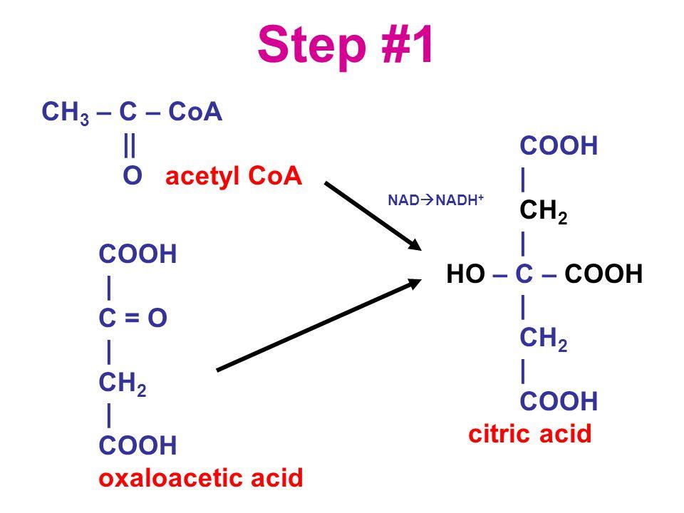 Step #1 CH 3 – C – CoA || O acetyl CoA COOH | C = O | CH 2 | COOH oxaloacetic acid COOH | CH 2 | HO – C – COOH | CH 2 | COOH citric acid NAD  NADH +