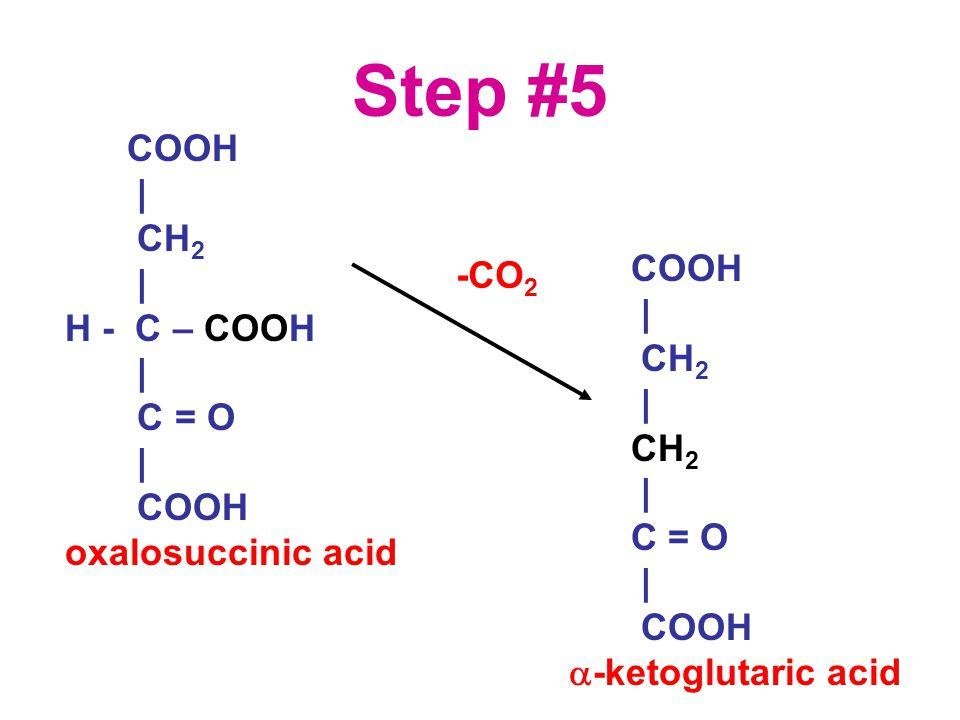 Step #5 COOH | CH 2 | H - C – COOH | C = O | COOH oxalosuccinic acid COOH | CH 2 | CH 2 | C = O | COOH  -ketoglutaric acid -CO 2