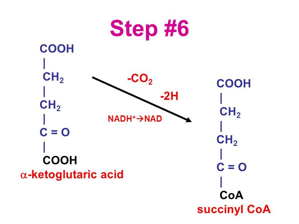 Step #6 COOH | CH 2 | CH 2 | C = O | COOH  -ketoglutaric acid COOH | CH 2 | CH 2 | C = O | CoA succinyl CoA -CO 2 -2H NADH +  NAD