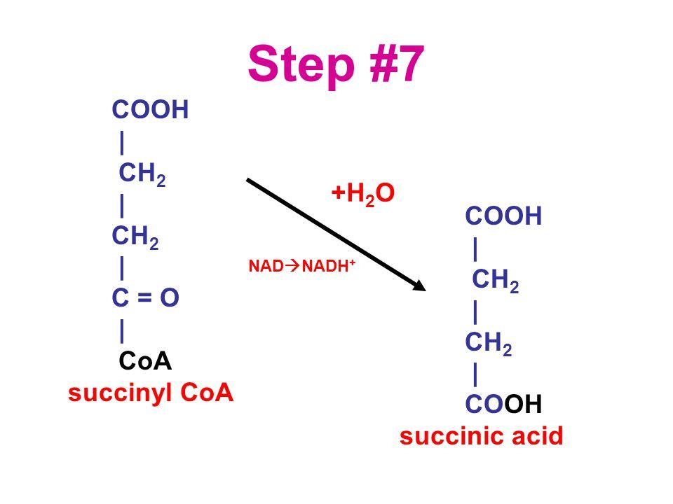 Step #7 COOH | CH 2 | CH 2 | C = O | CoA succinyl CoA COOH | CH 2 | CH 2 | COOH succinic acid +H 2 O NAD  NADH +
