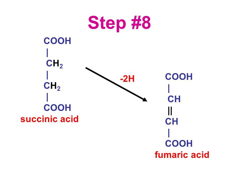 Step #8 COOH | CH 2 | CH 2 | COOH succinic acid COOH | CH || CH | COOH fumaric acid -2H