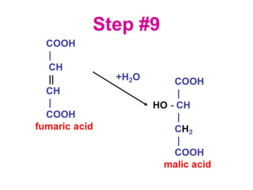 Step #9 COOH | CH || CH | COOH fumaric acid COOH | HO - CH | CH 2 | COOH malic acid +H 2 O