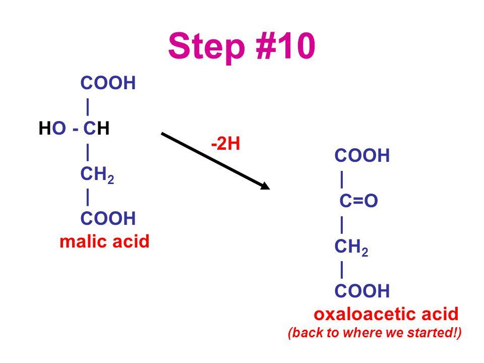 Step #10 COOH | HO - CH | CH 2 | COOH malic acid COOH | C=O | CH 2 | COOH oxaloacetic acid (back to where we started!) -2H