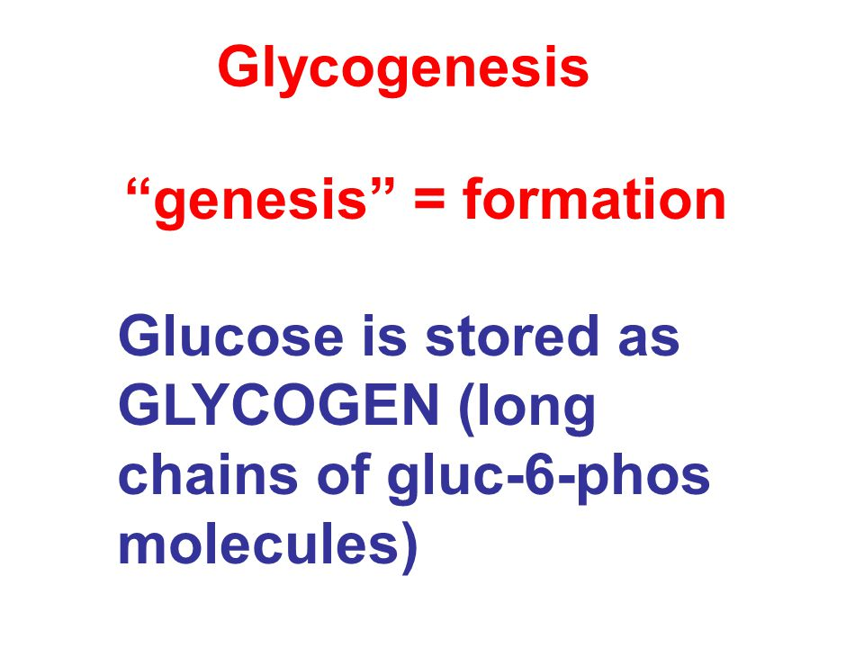 Glycogenesis Glucose is stored as GLYCOGEN (long chains of gluc-6-phos molecules) genesis = formation