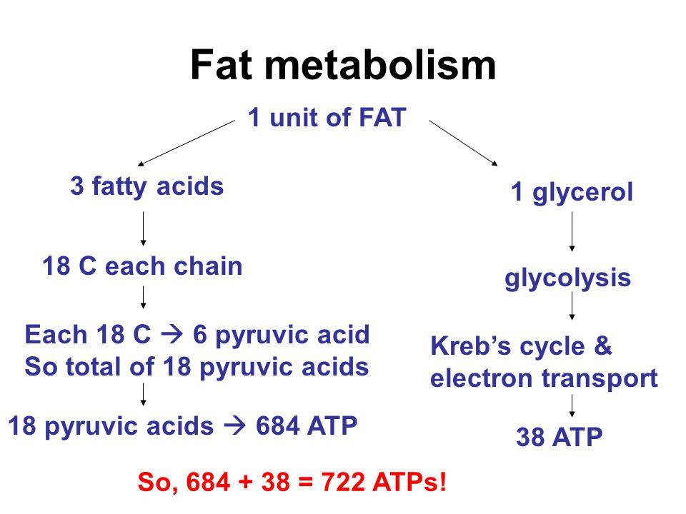 Fat metabolism 1 unit of FAT 3 fatty acids 1 glycerol 18 C each chain glycolysis Kreb's cycle & electron transport 38 ATP Each 18 C  6 pyruvic acid So total of 18 pyruvic acids 18 pyruvic acids  684 ATP So, 684 + 38 = 722 ATPs!
