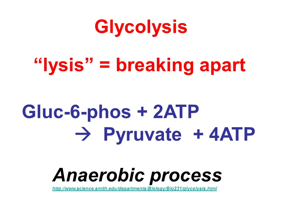 Glycolysis Gluc-6-phos + 2ATP  Pyruvate + 4ATP Anaerobic process http://www.science.smith.edu/departments/Biology/Bio231/glycolysis.html lysis = breaking apart