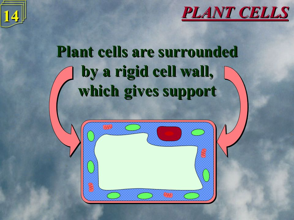 PLANT CELLS 13 Plants are made up of lots of tiny boxes, called Cells, which can be seen under a microscope Plants are made up of lots of tiny boxes,