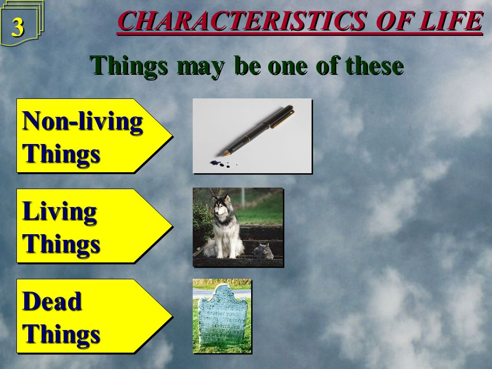CHARACTERISTICS OF LIFE 2 2