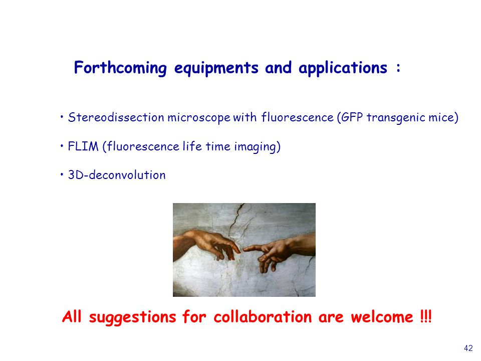 42 Forthcoming equipments and applications : Stereodissection microscope with fluorescence (GFP transgenic mice) FLIM (fluorescence life time imaging)
