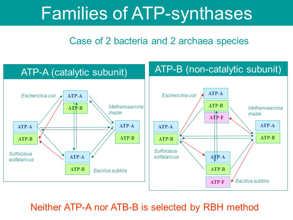 ATP-F Case of 2 bacteria and 2 archaea species ATP-A (catalytic subunit) ATP-B (non-catalytic subunit) Escherichia coli Bacillus subtilis Methanosarci
