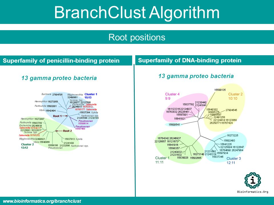 BranchClust Algorithm Superfamily of penicillin-binding protein Superfamily of DNA-binding protein 13 gamma proteo bacteria Root positions www.bioinfo