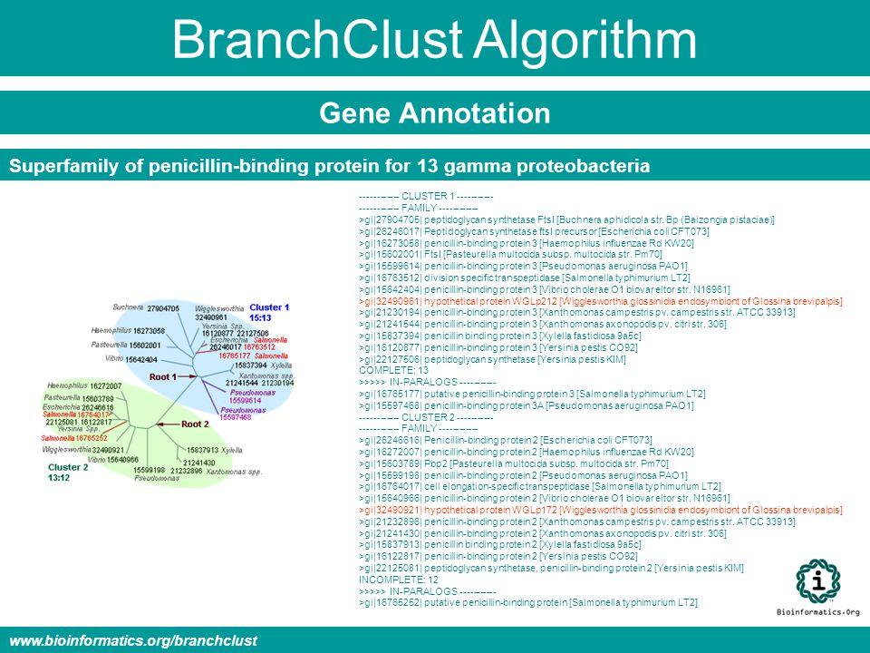 BranchClust Algorithm Gene Annotation www.bioinformatics.org/branchclust ------------ CLUSTER 1 ----------- ------------ FAMILY ------------ >gi|27904705| peptidoglycan synthetase FtsI [Buchnera aphidicola str.