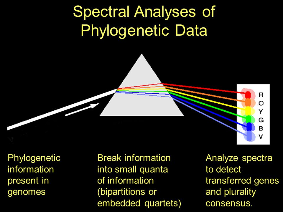 Phylogenetic information present in genomes Break information into small quanta of information (bipartitions or embedded quartets) Spectral Analyses of Phylogenetic Data Analyze spectra to detect transferred genes and plurality consensus.
