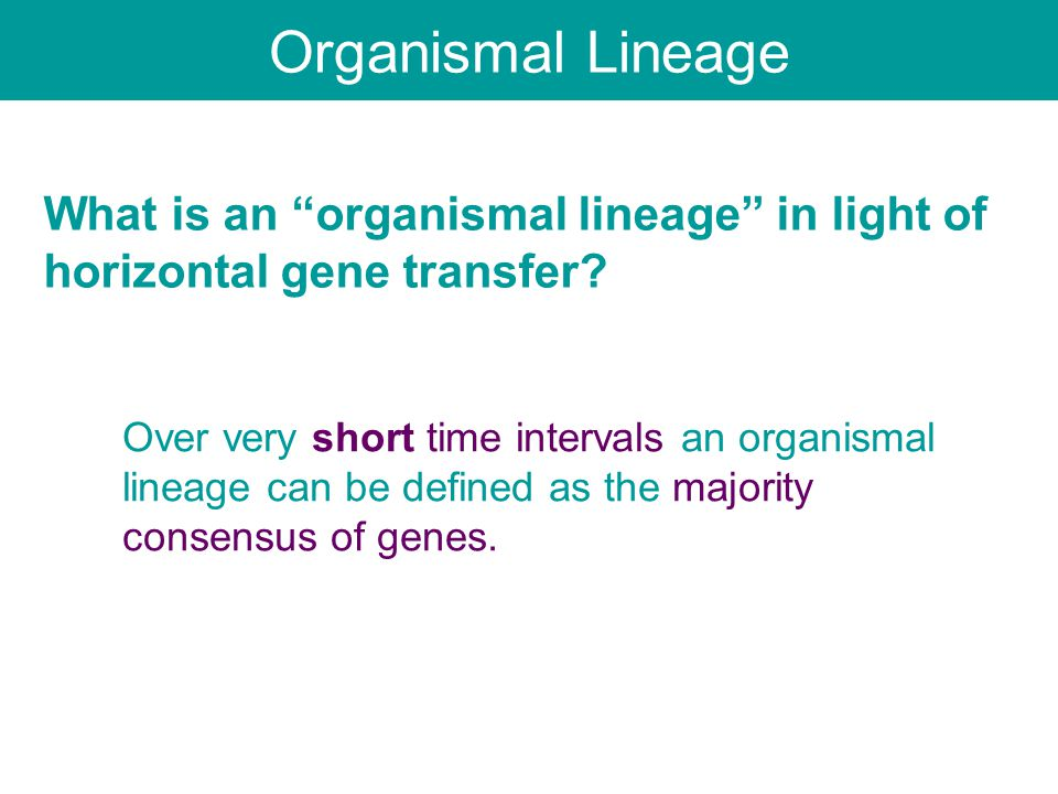 "What is an ""organismal lineage"" in light of horizontal gene transfer? Over very short time intervals an organismal lineage can be defined as the major"